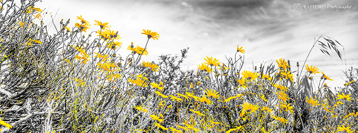 Karoo flowers